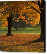 Loose Park Maple Trees Canvas Print by Chad Davis