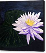 Lotus Blossom At Night Canvas Print