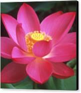 Lotus Blossom Canvas Print by Elvira Butler