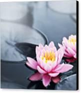 Lotus Blossoms Canvas Print