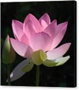 Lotus Bud--snuggle Bud Dl005 Canvas Print by Gerry Gantt