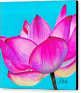 Lotus  Canvas Print by Laura Bell