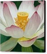 Lotus Of Awakening Canvas Print