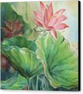 Lotus Of Hamakua Canvas Print by Wendy Wiese
