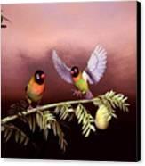 Love Birds By John Junek  Canvas Print
