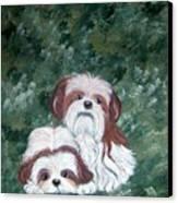 Loving Shih Tzu Canvas Print