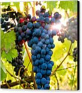 Luminous Grapes Canvas Print