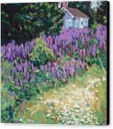 Lupine Cottage In Maine Canvas Print by Hillary Gross
