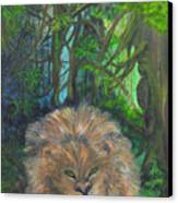 Lying Lion Canvas Print