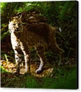 Lynx Rufus Canvas Print