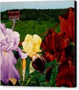 M S  O S Irises 2  Canvas Print