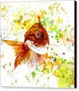 Ma Koi Canvas Print