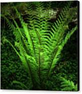 Magic Fern Canvas Print