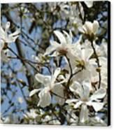 Magnolia Flowers White Magnolia Tree Flowers Art Prints Canvas Print