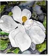 Magnolia Tree Flower Canvas Print