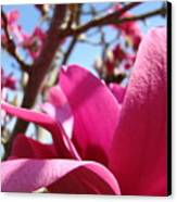 Magnolia Tree Pink Magnoli Flowers Artwork Spring Canvas Print