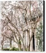 Magnolias In Back Bay Canvas Print