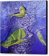 Mahi Mahi Original Oil Painting 24x30in Canvas Print by Manuel Lopez