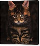 Maine Coon Kitty Canvas Print by Sabine Lackner