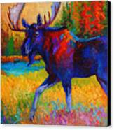 Majestic Monarch - Moose Canvas Print by Marion Rose