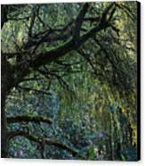 Majestic Weeping Willow Canvas Print