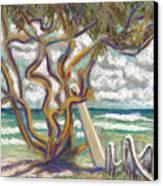Malaekahana Tree Canvas Print by Patti Bruce - Printscapes