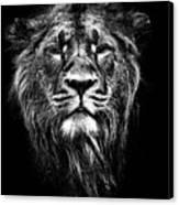 Male Asiatic Lion Canvas Print by Meirion Matthias
