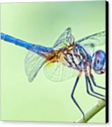 Male Blue Dasher Dragonfly Canvas Print by Bonnie Barry
