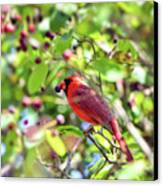 Male Cardinal And His Berry Canvas Print by Kerri Farley