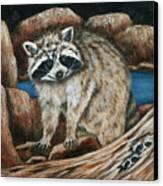 Mama Racoon Canvas Print