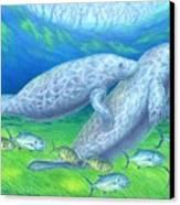 Manatee Spring Canvas Print by Tim McCarthy