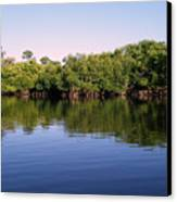 Mangrove Forest Canvas Print by Steven Scott