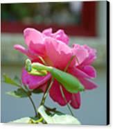 Mantis And Rose Canvas Print