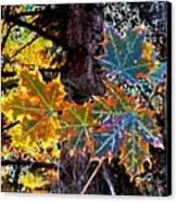 Maple Mania 14 Canvas Print