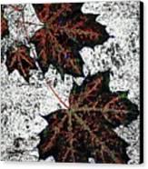 Maple Mania 17 Canvas Print