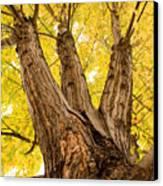Maple Tree Portrait Canvas Print