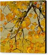 Maples In Autumn Canvas Print by Carolyn Doe