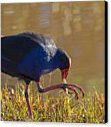 March Of The Swamphen Canvas Print by Mike  Dawson