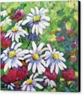 Marguerites 001 Canvas Print