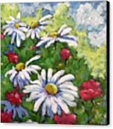 Marguerites 002 Canvas Print