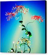 Math Chrysanthemum 1 Canvas Print by GuoJun Pan