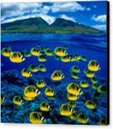 Maui Butterflyfish Canvas Print by Dave Fleetham - Printscapes