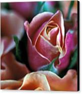 Mauve And Peach Roses Canvas Print by Kathy Yates