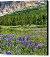Meadow With Lupines Canvas Print by Merilee Phillips
