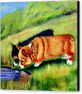 Meeting Mr. Frog Corgi Pups Canvas Print by Lyn Cook