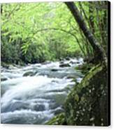 Middle Fork River Canvas Print