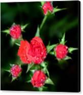 Mini Roses Canvas Print