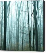 Misty Forest Canvas Print by John Greim