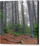 Misty Morning In An Algonquin Forest Canvas Print