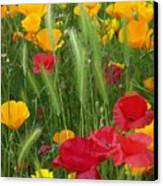 Mixed Poppies Canvas Print